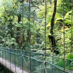 Canopy: A system of walkways to comfortably walk through the treetops