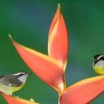 A feast for bird lovers