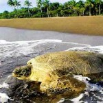 Tortuguero National Park - an example of effective protection